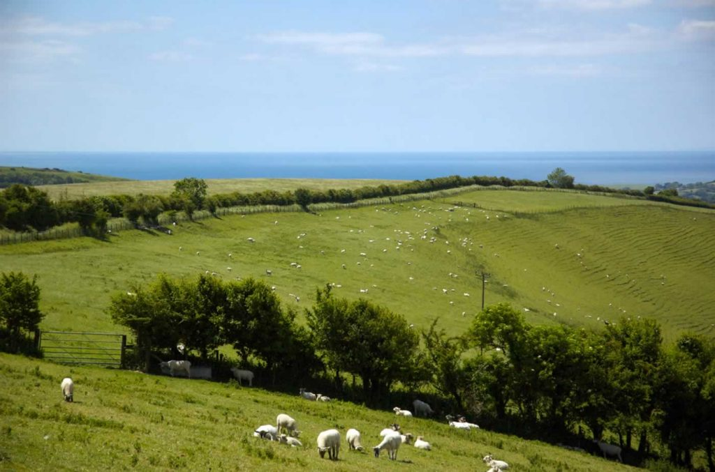 West Dorset Sea View